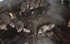 Động vật hoang dã nằm chờ chết trong kho Hải quan vì xử lý chậm