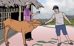 Hối hận trước chuồng bò