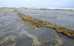 Xác định nguyên nhân khiến nước biển đen như cà phê ở Dung Quất