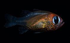 Tìm thêm 70 sinh vật mới nhưng hơn 90% các loài vẫn chưa được biết đến