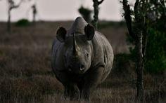 Thêm hàng nghìn loài động, thực vật có nguy cơ tuyệt chủng