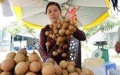 Kể chuyện cây trái miền tây - Kỳ 6: Trăm năm Giồng Nhãn Bạc Liêu