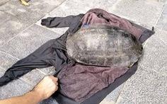 Câu trộm rùa hơn 10kg nổi lên ở hồ Hoàn Kiếm, bị dân trình báo