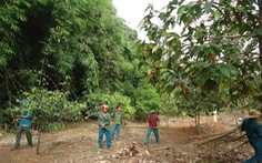 Chi sai hàng tỉ đồng trong quản lý, bảo vệ rừng ở Bình Phước