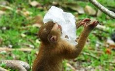 Đi thăm công viên rừng ở Thái sẽ phải mang theo túi đựng rác