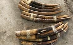 Hơn 2 tấn ngà voi, vảy tê tê 'gắn mác' gỗ đỏ cập cảng Hải Phòng