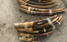 Nam Béo - 'trùm' buôn ngà voi, sừng tê từ châu Phi - lãnh án 11 năm tù