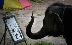 Thảm cảnh của những con voi phục vụ du lịch ở Thái Lan