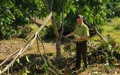 Hỗ trợ gần 800 triệu cho 85 hộ dân bị thiệt hại do voi rừng