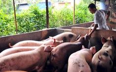 TP.HCM phải hoàn thiện đề án tái cơ cấu ngành chăn nuôi heo