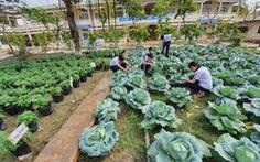 Độc đáo ngôi trường thầy trò trồng đầy bắp cải, rau, hoa