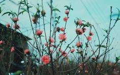 Tết Dương lịch: miền Bắc và Hà Nội mưa rét, miền Nam nắng ấm