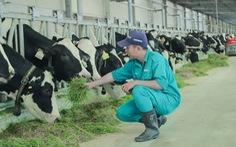 Tết tại 'resort' bò sữa Vinamilk có gì đặc biệt?