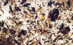 Côn trùng đang tuyệt chủng, kết cục 'tận thế' cho hệ sinh thái