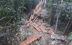 Khởi tố vụ án phá rừng sát biên giới trong Tết Nguyên đán