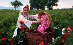 """Ngành """"công nghiệp hoa hồng"""" Bulgaria thu hút nhà đầu tư"""