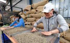Giá cà phê 'nhảy múa', nông dân trữ hàng