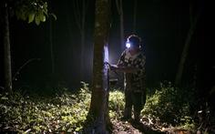 Kết quả bầu cử Thái phụ thuộc... những cánh rừng cao su