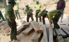 Kiểm tra vụ phá rừng ở Vườn quốc gia Phong Nha - Kẻ Bàng