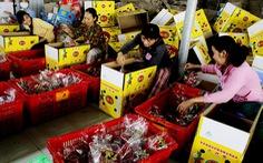 Trung Quốc tăng mua, nhiều loại trái cây tăng giá mạnh