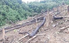 Điều tra vụ một phó chủ tịch xã phá rừng để trồng keo