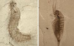 Phát hiện hóa thạch của nhiều loài sinh vật mới