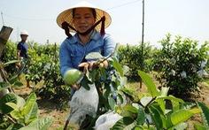 Người lập trang trại cây trái thênh thang giữa ruộng đồng trũng thấp