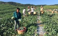 Dân trồng dưa hấu tố bị đe dọa đòi tiền bảo kê