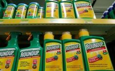 Bayer phải bồi thường 80,9 triệu USD trong vụ thuốc diệt cỏ Roundup