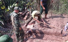 Chôn cả trăm phách gỗ mun dưới hầm để giấu