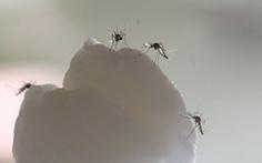 Đã biết 'chìa khóa' giúp muỗi biết cách săn lùng con người