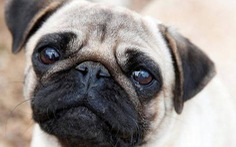 Gia đình Đức bị bắt chó trả nợ, khổ hơn cả… chị Dậu