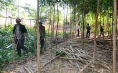 Nguyên bí thư huyện giao 9.700m2 đất cho chính quyền trước ngày bị cưỡng chế