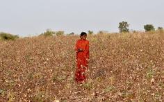 Nông dân trong cuộc bầu cử Ấn Độ