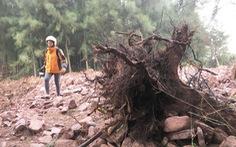 Dân 'vây' dự án nuôi tôm phá cả rừng phòng hộ ven biển