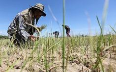 Nông dân Thái phải cầu cứu vì khô hạn