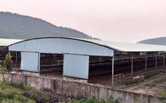 Thẩm định giá trại bò liên quan đến cha con ông Trần Bắc Hà
