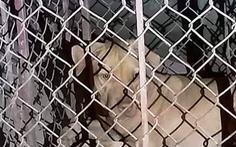 Học sinh nuôi chó dữ trong ký túc xá, nhà trường nói không biết