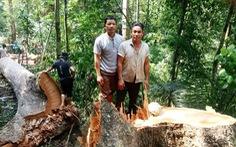 Xác định hai người 'xẻ thịt' rừng phòng hộ ở Quảng Nam