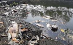 Cá chết trên sông Phú Lộc, Đà Nẵng do thiếu oxy