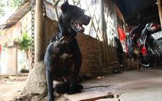 Tránh sốc nhiệt, cắt tỉa lông cho chó mát mùa nắng nóng