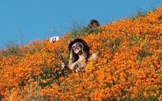 Những cánh đồng hoa dễ tan nát vì... ảnh ngàn like