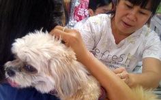 Lãnh đạo phường cũng chưa biết thủ tục đăng ký nuôi chó mèo!