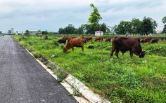 Xót xa 'đại đô thị' ngàn tỉ để... thả bò