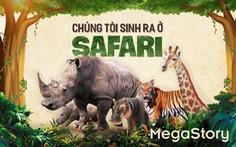 Chúng tôi sinh ra ở Safari