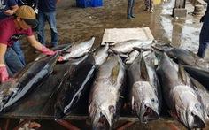 5.000 tấn cá nằm chờ 'xuất cảnh' vì thông tư ngáng đường