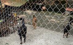 Đàn chó dữ cắn chết bé trai 7 tuổi: Quá đau xót!