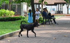 Vẫn còn nhiều chó thả rông ở trung tâm TP.HCM