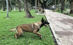 Huấn luyện chó dữ ở… công viên, người đi dạo 'phát khiếp'
