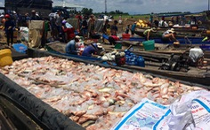 Cá lồng bè lại chết trắng sông La Ngà